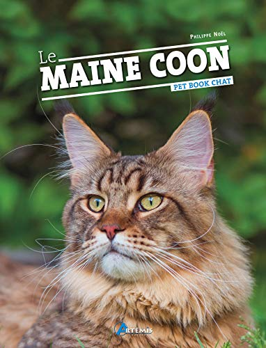 Maine Coon gatto Schleich Wild Life figura-modello 13893