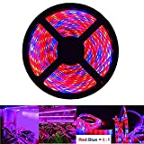 AveyLum Plant Grow Light 5050 SMD Red and Blue LED Plant Strip Lights Indoor Growing Lamp 16.4ft Waterproof Flexible Soft Rope Light for Greenhouse Hydroponics Flower Seeds