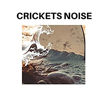 Crickets Noise