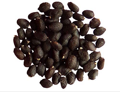 Basilic Grec - 0,20 grammes - Ocimum Basilicum Grec - Basil - SEM02