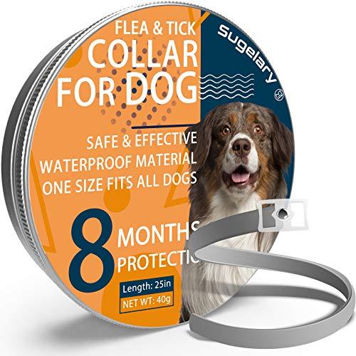 Collar Antiparasitario para Perro, Protección de 8 Meses Collar Antiparasitario de Perro Impermeable Ajustable Collar de Pulgas para Perros Mejorado con Aceites Esenciales Naturales (1pcs)