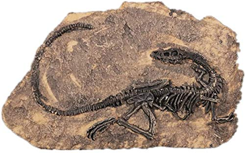 ZHENAO Decoración Del Hogar Arte de la Pared Resina Vintage Pared Colgando Decoración Escultura Dinosaur Fossil Crafts Muestra...
