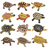12 Piece Sea Turtle Animal Toys - Miniature Figurines - Unique Turtle Toys Detailed and Hand Painted Reptiles Party Favor Decorations and Kids