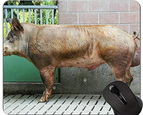 Yanteng Alfombrilla de ratón Antideslizante de Pintura de Cerdo, Alfombrilla de ratón