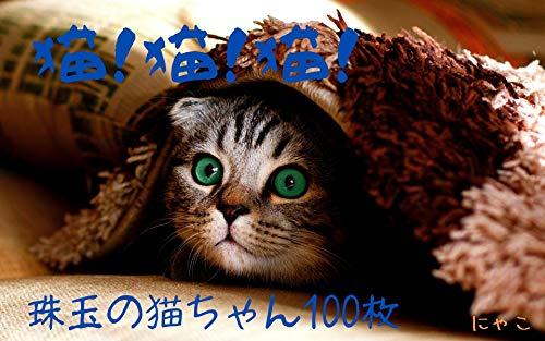 猫!猫!猫! (あにまる惑星)