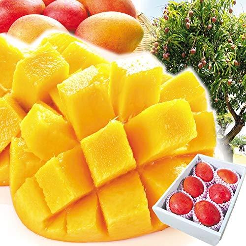 国華園 台湾産 ご家庭用 アップルマンゴー 約3�s 1組 南国フルーツ