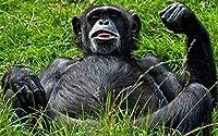 パズル動物500枚写真動物猿クリスマスプレゼント52x38cm