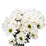 GlobalRose 72 Blooms of White Color Daisy Pom Poms 18 Stems - Fresh Flowers for Delivery