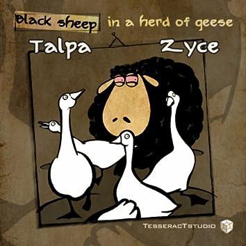 Black Sheep In A Herd Of Geese