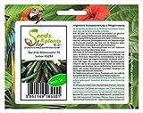 Pezzi - 5x Zucchina Ambassador F1 Semi Ortaggi Giardino Semi Seme Frisch Nuovo KS284 - Seeds Plants Shop Samenbank Pfullingen Patrik Ipsa
