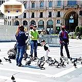 Jaula para Pájaros de 90 X 45 X 50 cm, Jaula para Palomas, Caja de Nido de Madera Maciza, Jaula de Transporte de Madera Plegable para Palomas de Carreras (Color : Brown, Talla : 90 * 45 * 50 cm)