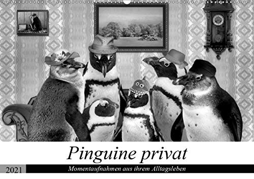 Pinguine privat (Wandkalender 2021 DIN A2 quer)