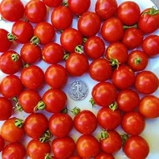 tomato toe