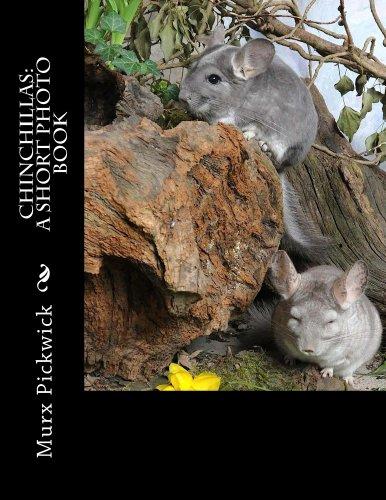 Chinchillas: A Short Photo Book (English Edition)
