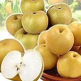国華園  青森産 おまかせ和梨 4.5kg ご家庭用 なし 梨