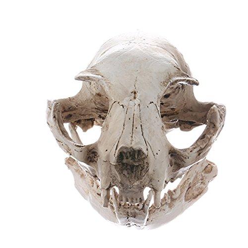 Gazechimp Modèle Crâne de Chat en Résine Réaliste Squelette Animal Décoration Gothique pour Pub Bar