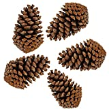 PineCones Tall Bulk Package All Natural,Real Preserved Pine Cones Big Pinecones and Perfect Natural Pine Cones for Christmas Hanging Ornaments Bowl Vase Fillers (3-4.3 in(12pcs))