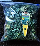 Fresh Organic Rue Plant Ruda Common Rue Herb of Grace 2 oz branches and leaves