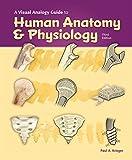 Visual Analogy Guide to Human Anatomy & Physiology