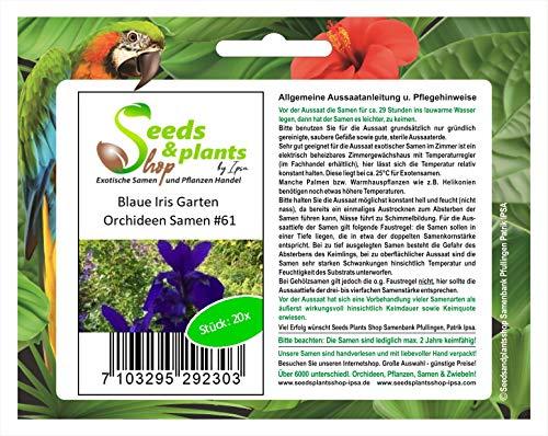 Stk - 20x Blaue Iris Garten Orchideen Blumen Pflanzen - Samen #61 - Seeds Plants Shop Samenbank Pfullingen Patrik Ipsa