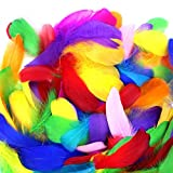 Best Feathers - Coceca 300pcs 3-5 Inches Colorful Feathers for DIY Review