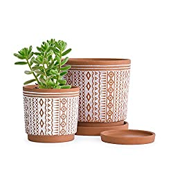 terracotta pots for indoor plants