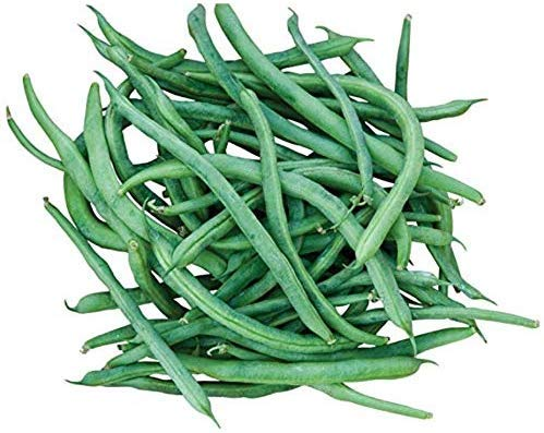 blue lake pole beans - 8
