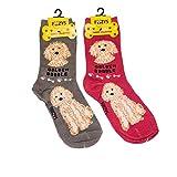 Foozys Unisex Crew Socks | Canine/Dog Collection | Goldendoodle