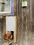 Cajou Hühnertür inklusive Schieber
