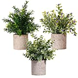 New rui cheng Artificial Plant, Mini Plastic Plants Small Fake Plant Real Eucalyptus Rosemary Gypsophila 3pack Set with Pot Indoor Green Bonsai for Home Bathroom Kitchen Office Desk Garden Decoration
