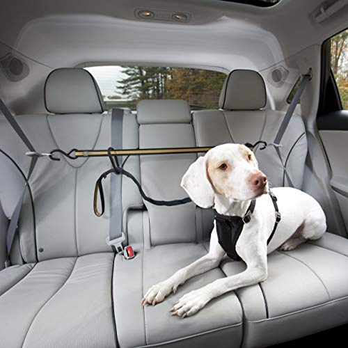 Kurgo Direct to seat belt Tether for Dogs, Car...