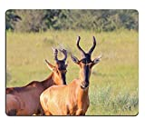 luxlady Gaming tapis de souris d'image: 27429877Rouge buselaphus Wildlife Fond de Afrique Funny Faces en Nature