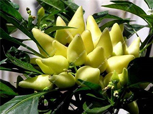 Cerise poivre Graines Bonsai plantes ornementales délicieux Chili Capsicum semences Diy jardin ménages croissance naturelle 300 semences 3
