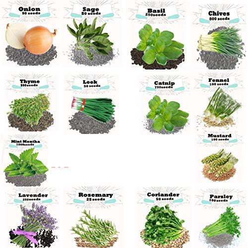 4075+ Seeds Super Herb Bulk 11 Varieties Peppermint, Rosemary, Lavender, Thyme, Parsley (14 Varieties)