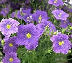 Best nierembergia purple robe Reviews