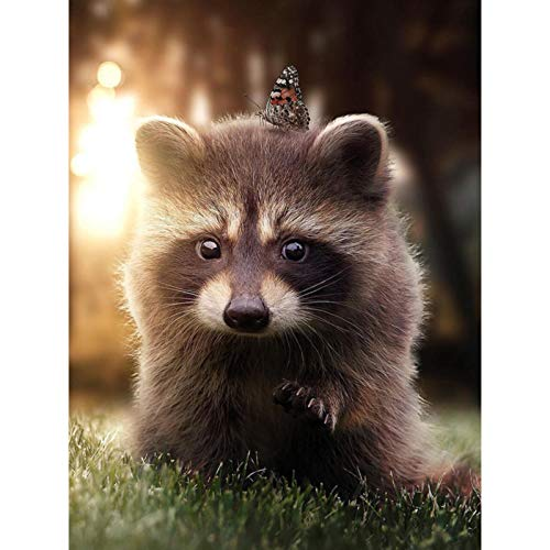 Diamond Painting Kits for Adults, Kids. Office Decoration, Home Room The Sunshine of A Raccoon 11.8x15.7 in by Megei