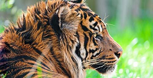 Pintura por números al óleo Kits de pintura Lienzo digital Arte la pared Pinturas Decoraciones Regalos(16X20 In) sin marco-depredador de tigre de sumatra