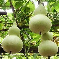 10 Semillas de Calabaza de peregrino (Lagenaria siceraria)