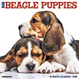 Willow Creek Press: Just Beagle Puppies 2020 Wall Calendar (