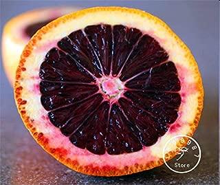 10 Pieces/Bag Hot Sale! Fresh Rare MORO BLOOD orange Red Blood Orange SEEDS bonsai fruit tree seeds