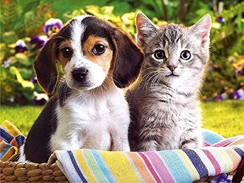 Kits de gato de color Pintura al óleo por números Figura Pintura acrílica Dibujo sobre lienzo Pintado a mano para adultos Conjunto de niños Decoración para el hogar A6 60x75cm