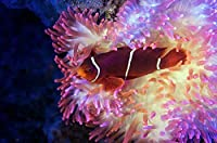 300ピース美しい縞模様の魚ジグソーパズル大人のジグソーパズル面白いのパズル娯楽遊戯誕生日プレゼント女.男の子
