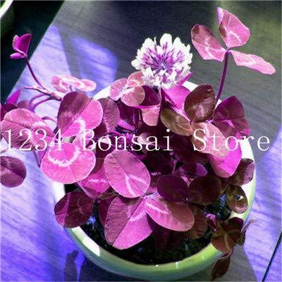 Bloom Green Co. 100Pc Vier Blatt-Liebhaber Klee-Blumen Bonsai Indoor Pflanzenset Vier-Blatt-Liebhaber Bonsai-Büro-Schreibtisch Beautifying Blooming Pflanze: 22