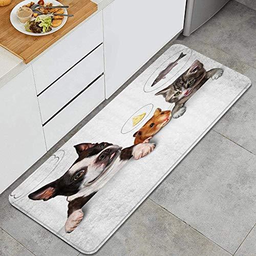 PANILUR Tappeto antiscivol,Cat Fish Dog Bone Mouse Mangia Pane Animale Divertente,da Usare Come zerbino o per Soggiorno, Camera da Letto, corridoio, Cucina
