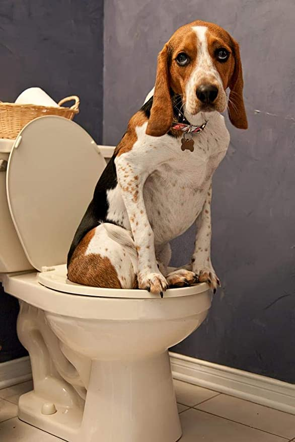 Signs Plaques Gifts Bathroom Poop Animal Toilet Wall decor Dog Scolds Owner