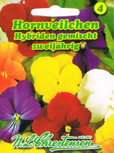 Hornveilchen Hybriden Mischung Viola cornuta zweijährig
