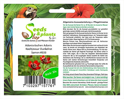 Stk - 10x Adonisröschen Adonis Kooltjevuur Dunkelrot Pflanzen - Samen #333 - Seeds Plants Shop Samenbank Pfullingen Patrik Ipsa