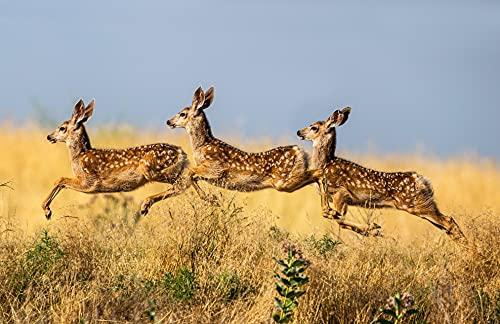 REHE 6176A - Papel pintado fotográfico (fieltro, 400 x 260 cm), diseño de bosque, árboles, animales, ciervos, incluye cola