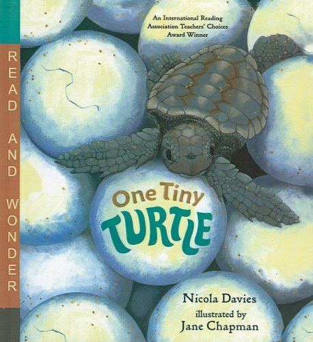 One Tiny Turtle (Read and Wonder (Pb)) by Davies, Nicola (2005) Hardcover