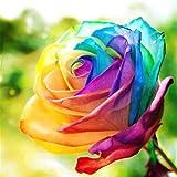 Dreamshopping - 200 Semillas Rosa Arco Iris Multicolor Rosa Flor Semillas para Plantar Jardin, Rosas Raras